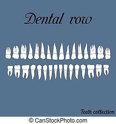 dental row teeth - incisor, canine, premolar, molar upper...