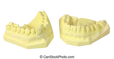 Dental Teeth Moulds on White Background