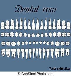 dentale, række, tænder