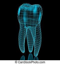 dente, maglia