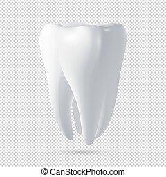 dente, realistico, vettore, disegno, umano, icon., template.