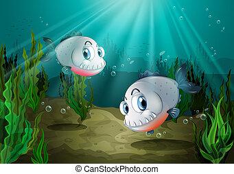 denti, due, mare, sotto, pesci, affilato