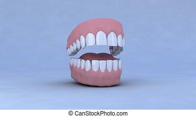dentier, animation, ouvert, 3d