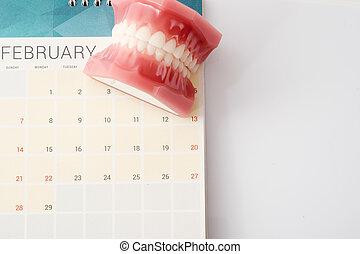 Dentist demonstration teeth model on calendar