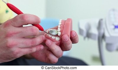 Dentist examines teeth of jaw in hand by mirror