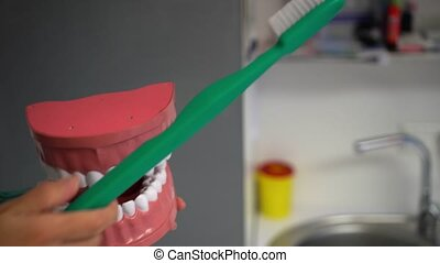 Dentist showing teeth brushing with toothbrush on artificial...