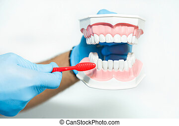 Dentist Shows How to Clean Teeth - Dentist showing how to...