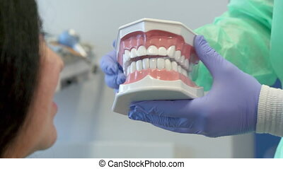 Dentist shows the client layout of human teeth