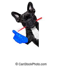 dentist toothbrush dog - french bulldog dog holding...
