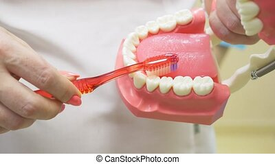 Dentist using jaw mock and toothbrush to teach patient...