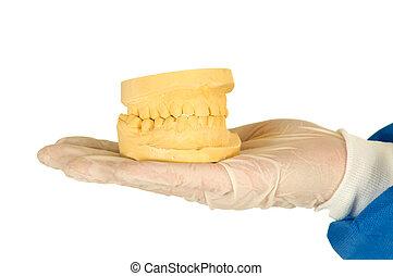 dentista, tenencia, un, molde, de, dentadura