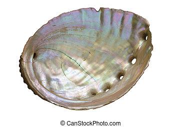 dentro, cáscara, oreja marina