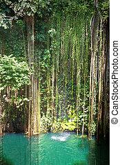 dentro,  ik,  Por,  Cenote,  kil