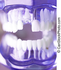Dentsts dental teeth model