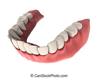 denture - 3d rendered illustration of human teeth