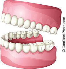Denture - illustration of denture on a white background