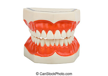 plastic dentures, used by dentists to show you how to brush your teeth, cavity example on the right bottom, isolated on white