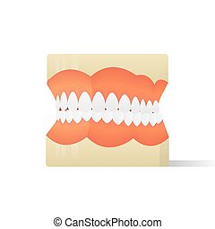 Dentures model illustration vector on white background. Medical concept.