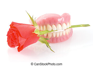 Dentures with rose. - Dentures holding red rose romanticly; ...