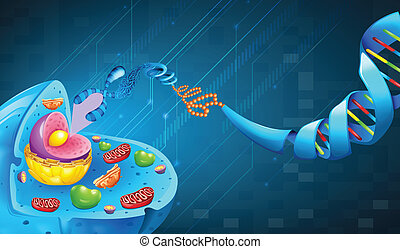Deoxyribonucleic acid - Illustration of Deoxyribonucleic...