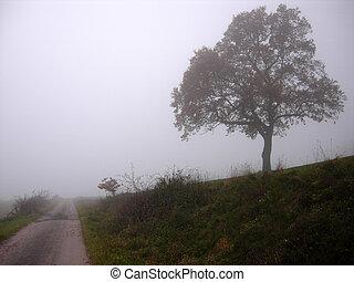 deprimente, paisaje de otoño, con, árboles, en, el, niebla