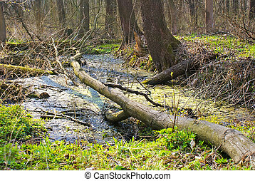 depths of a forest - a rampike tumbling into a brook in a...