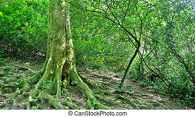 Depths of forest - Green trees in depths of forest