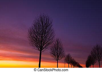 der, gasse, von, bäume, an, sonnenuntergang