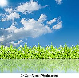 der, gras, mit, a, blauer himmel