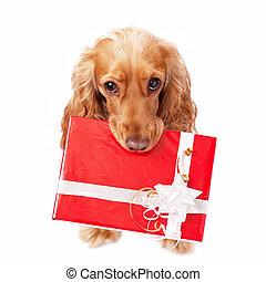 der, hund, mit, der, schöne , geschenk
