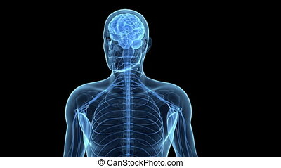 der, menschliches gehirn, und, nervenzellen