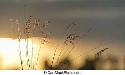 der, natur, sonnenuntergang