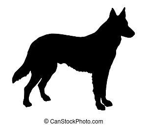 der, schwarz, silhouette, von, a, schafhirte, hund