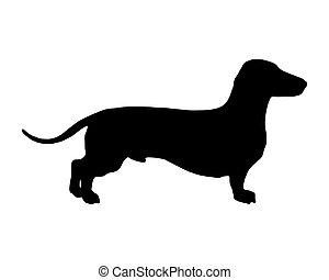 der, schwarz, silhouette, von, a, shortlegged, dachs, hund