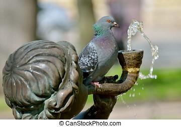 der, taube, gleichfalls, sitzen, auf, der, fountain.