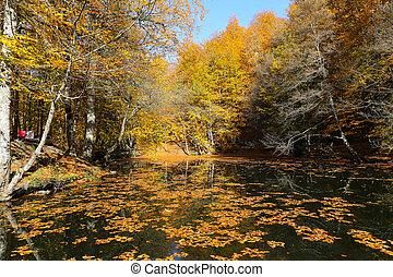 Derin Lake in Yedigoller National Park, Bolu, Turkey - Derin...