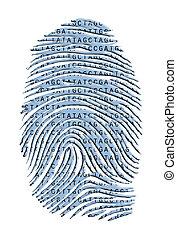 dernier, isolé, génétique, caractères doigt, blanc