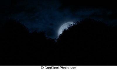 derrière, ascensions, arbres, lune
