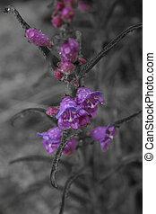 Desat Purple Flower