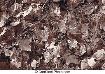 desaturated brown fall maple leaves background
