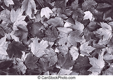 desaturated gray fall maple leaves background