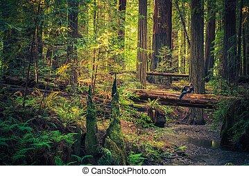 descansar, a, redwood
