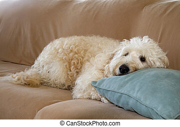 descansar, cão, sofá