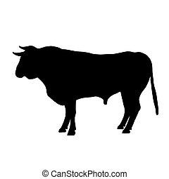 descansar, pretas, touro