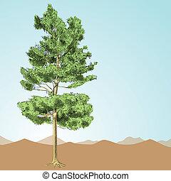 desenhado, -, árvore, mão