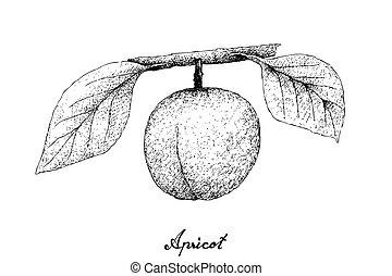 desenhado, branca, mão, fundo, apricote