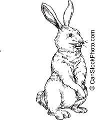 desenhado, coelho, mão