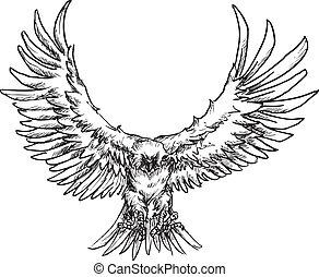 desenhado, mão, águia