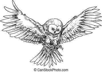 desenhado, mão, coruja
