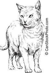 desenhado, mão, gato